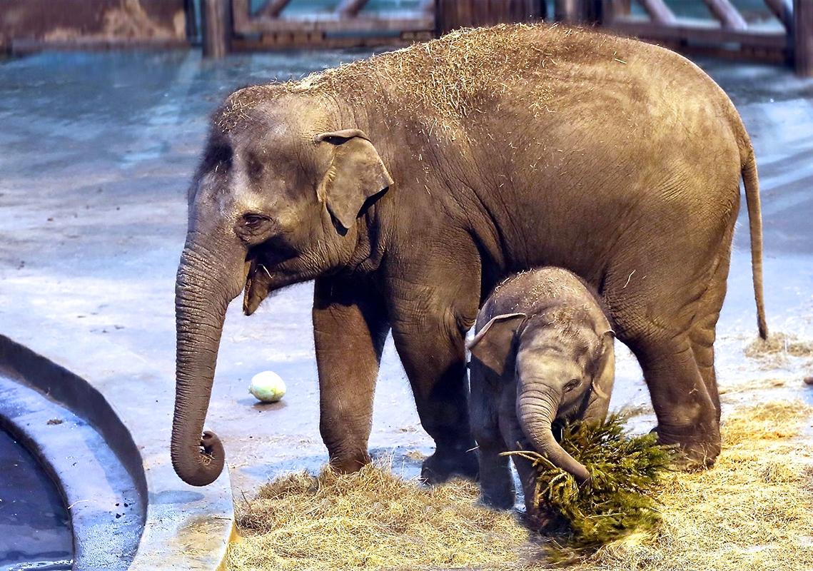 Топ-10 зоопарков России. Московский зоопарк