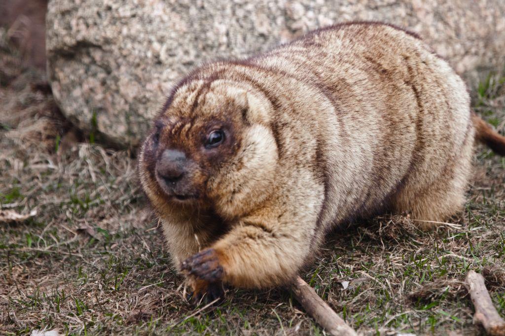 Московский зоопарк станет одной из площадок международной акции «Тотальный  диктант»